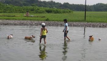 200785_kogi