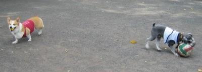 20079rock_2_ball_020_2