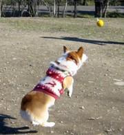 200812dog_run_005junp_2