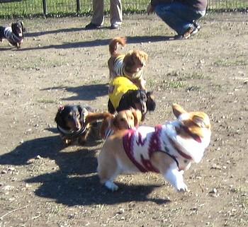 200812dog_run_006daks