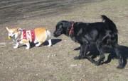 200812dog_run_012kuro