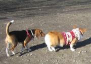 200812dog_run_015red1