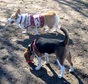 200812dog_run_036red_toru
