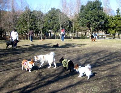 200812dog_run_038