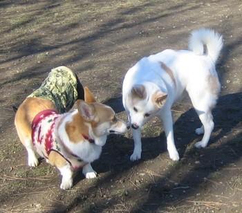 200812dog_run_041hello