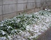 Snow2008123snow_031