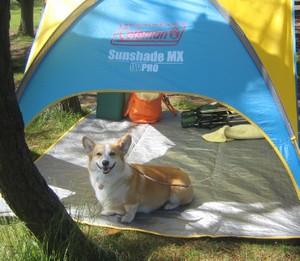 200861_tent_3
