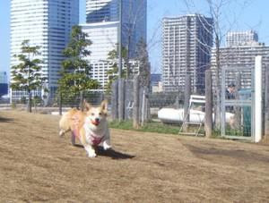 Dog_run_008start