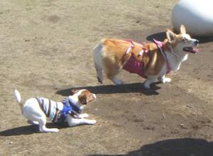 Dog_run_021mushi