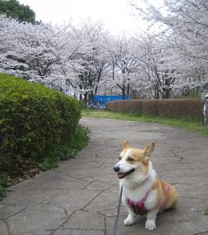 Misato_nana