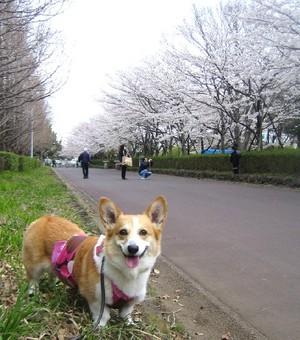 Misatomichi_034