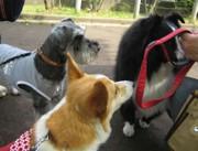 Sasuke_mama_2_2007421nana_027